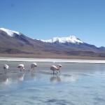 Flamingo's!