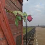 Rose on train car door