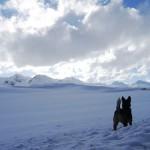 Margo versus snow