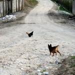 Margo versus chicken