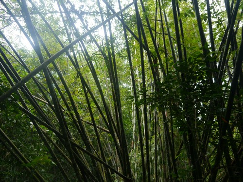 Loads of bamboo. Managed to take some home as a souvenir.