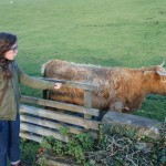Alex greets a heilan coo for the first time.