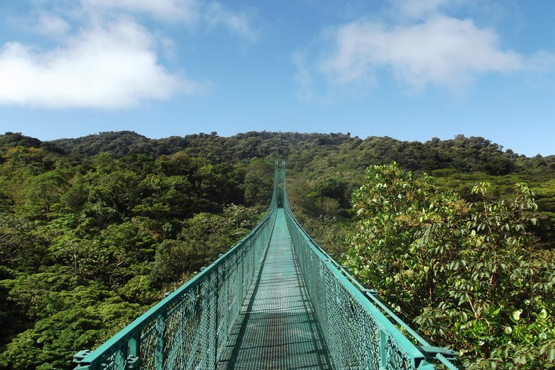 Into the trees in Monteverde, Costa Rica