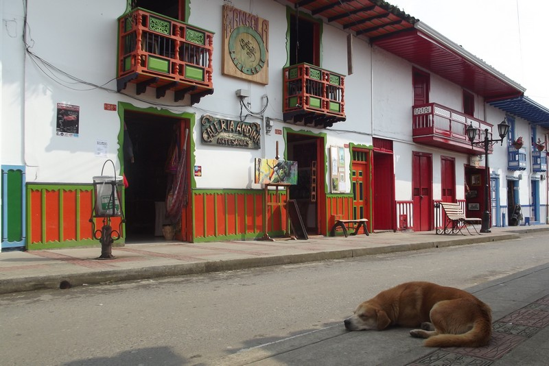 A snoozing pooch in the shade of Salento streets, Colombia