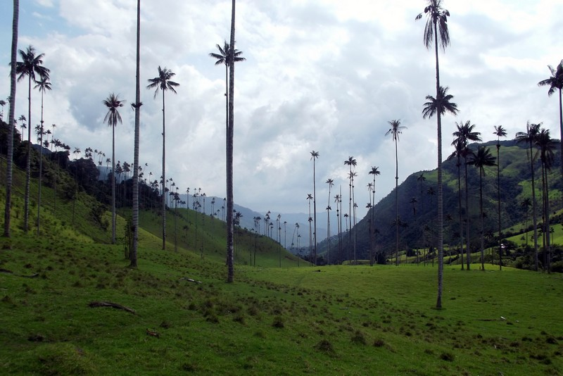 Exploring the famous palm trees of the Cocora Valley, Colombia