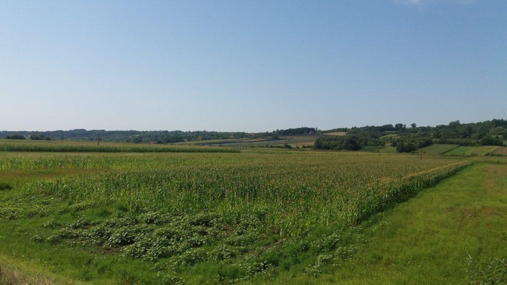 A Serbian field